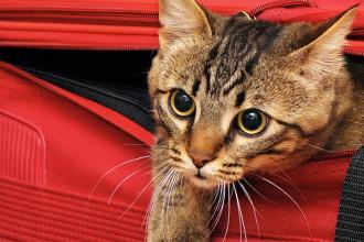 Organisez vos vacances avec votre animal