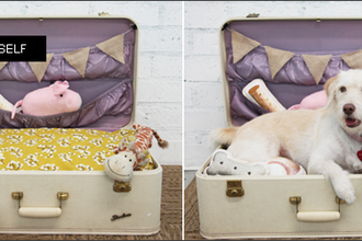 DIY - A suitcase basket for dogs and cats