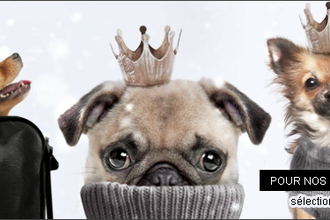 Shopping Canin pour les petits Mecs !