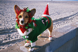 Pet's Christmas outfits.