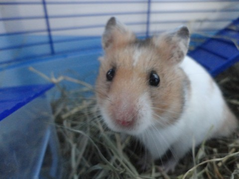 Hamster rencontre rencontre gay 03 rencontre