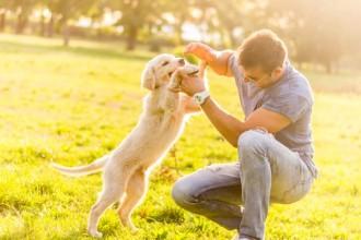 Comment éduquer mon chien de manière positive ?
