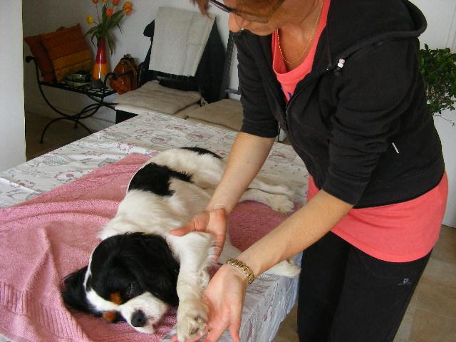 Rencontre avec Mon Chien Relax : massages pour chiens !