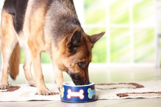 DIY - Dog birthday cake recipe