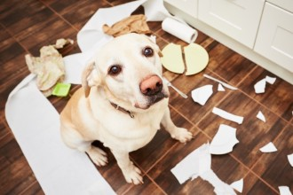 8 solutions maison pour nettoyer les…