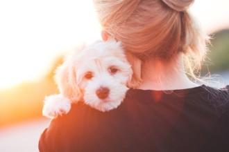 Comment gérer la séparation avec votre chien ?