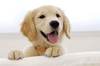 Comment rendre votre chien heureux ?