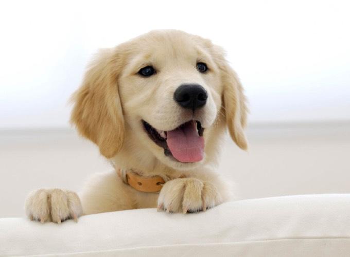 Image de chien heureux image de - Heureux comme un danois ...