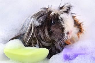 Les soins quotidiens de votre lapin ou de votre rongeur