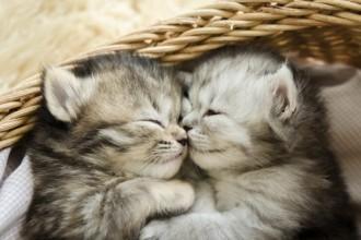 Trois règles d'or pour bien éduquer un chaton