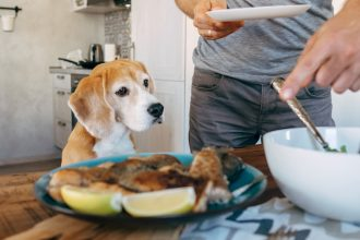 Why you shouldn't feed your dog tidbits…