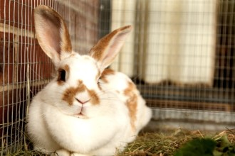 Pourquoi mon lapin ronge les barreaux de sa cage ?
