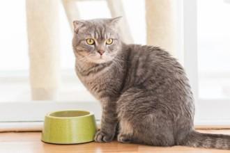 Réguler son chat : il mange trop vite et vomit !