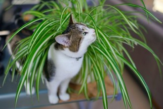 3 astuces pour empêcher votre chat de jouer avec vos…