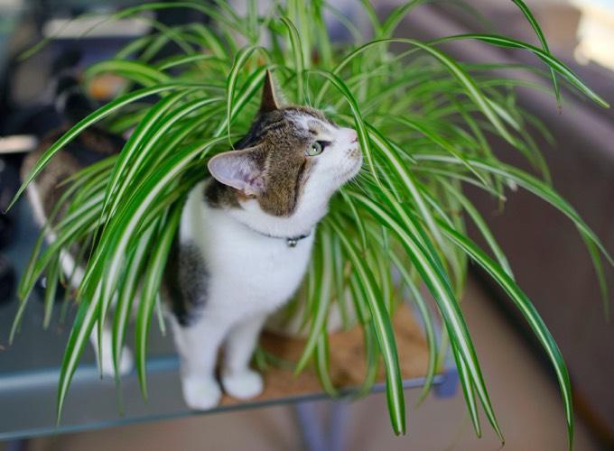 3 astuces pour empêcher votre chat de jouer avec vos plantes