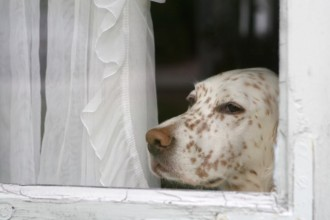 Apprendre la solitude au chien