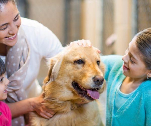 Comment devenir famille d'accueil pour animaux ?