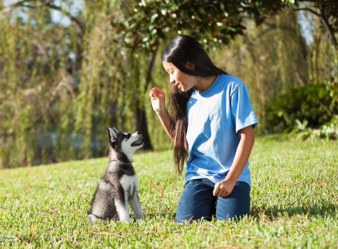 Éduquer son chien selon la méthode de renforcement positif