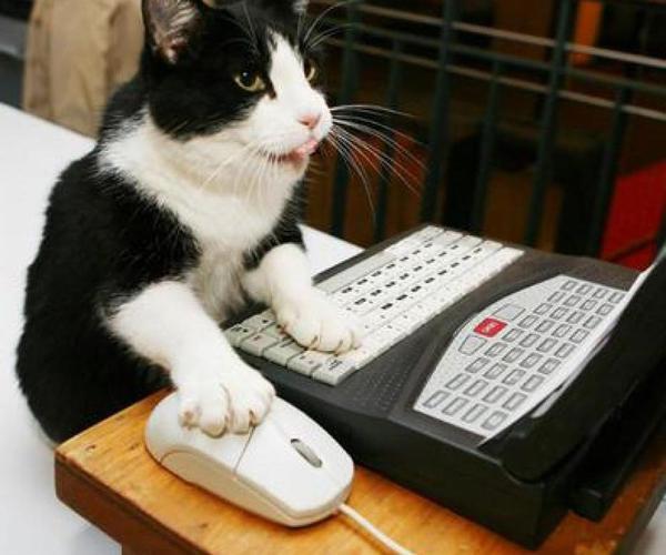 """Comment rendre son ordinateur """"cat proof"""" ?"""