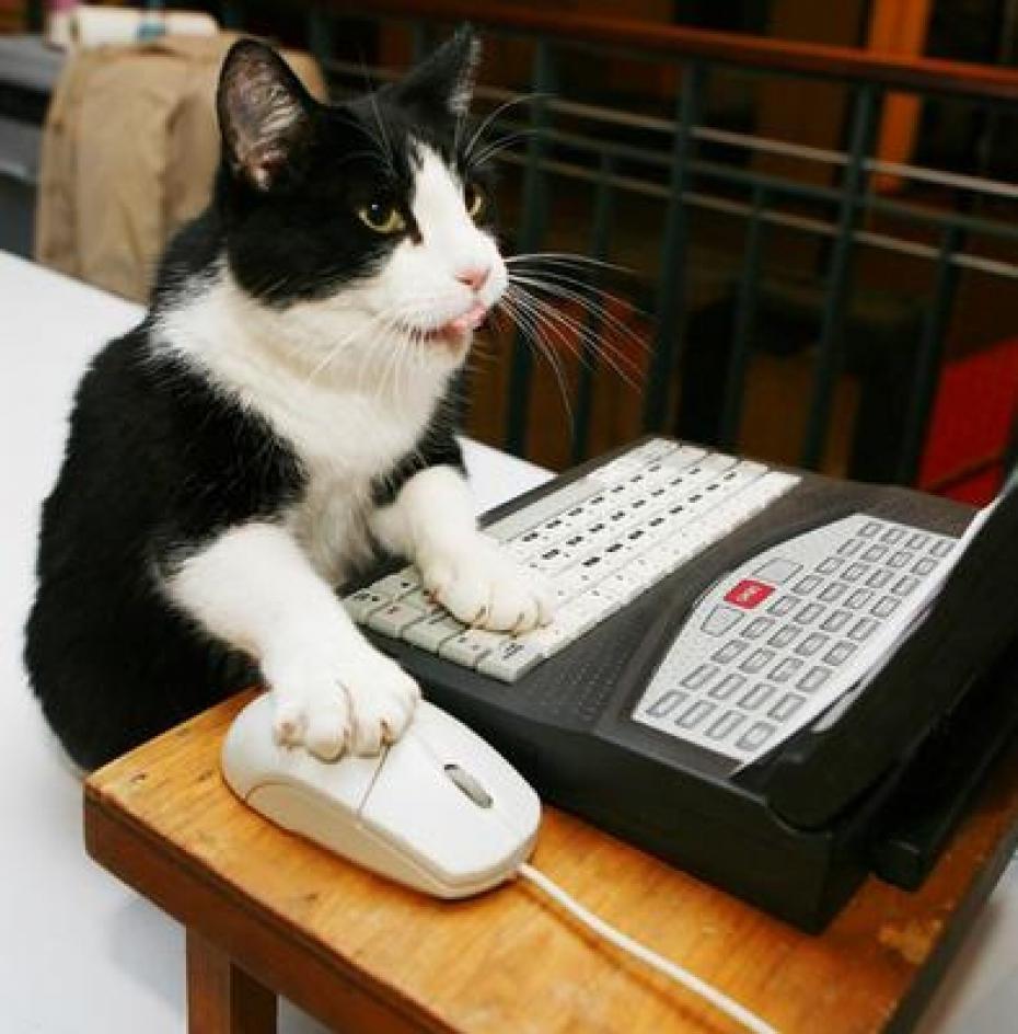 Znalezione obrazy dla zapytania cat in computer