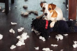 Pourquoi mon chien détruit-il tout ?