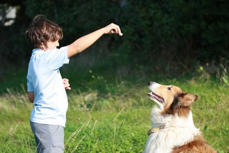 Enseigner l'ordre «assis» à son chien