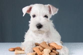 L'importance des croquettes pour les chiens