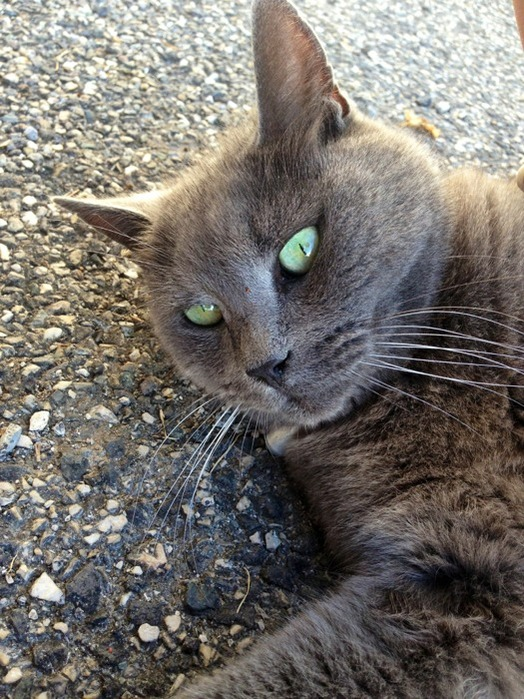 Chat rencontre 62