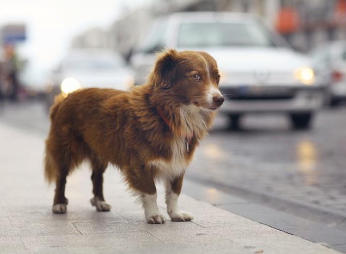 La gendarmerie met en garde contre une arnaque aux animaux perdus sur le réseau «Pet Alert»