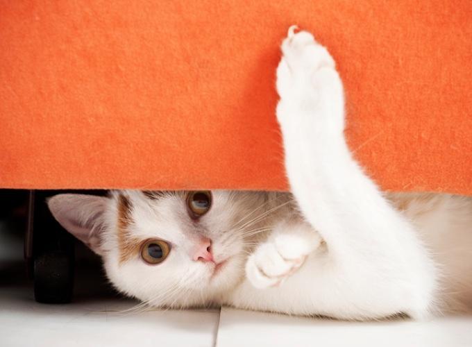 pourquoi mon chat fait ses griffes yummypets. Black Bedroom Furniture Sets. Home Design Ideas