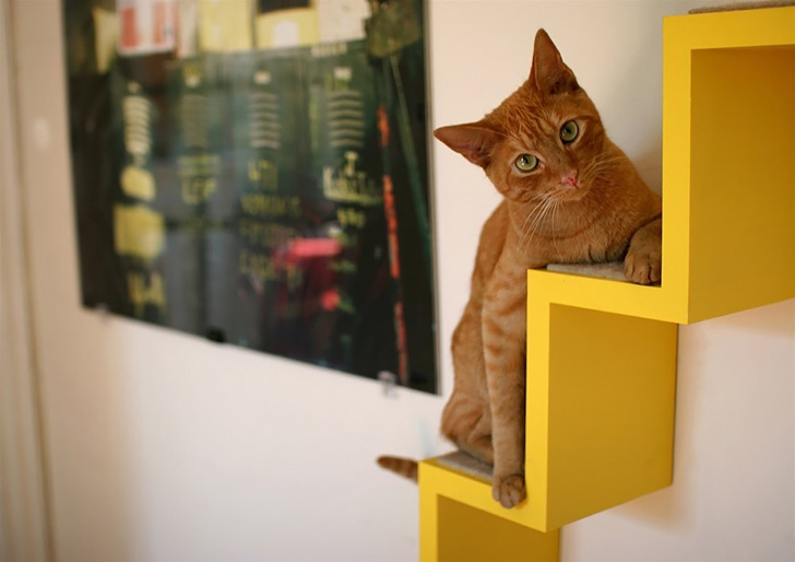 Fed Up Of Cat Trees? Create A Kitty Space!