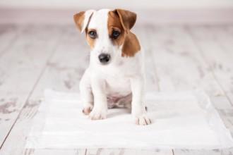 Que faire quand son chien n'est plus propre ?