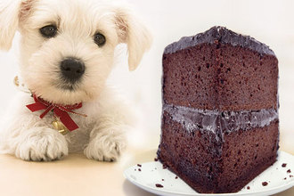 Why is chocolate dangerous for my dog?