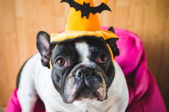 The Ultimate Halloween Guide to Keeping…