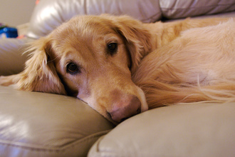 Seizures in dogs: the 5 most important…