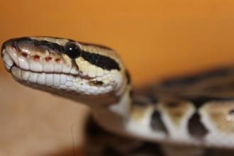 Ce que vous devez savoir sur les serpents