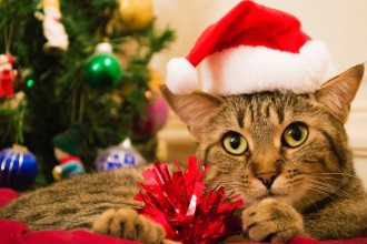 Why cats don't like Christmas