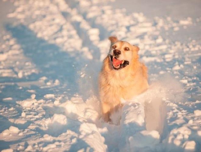 blog_yummets_chien2_neige_11_01_14.jpg