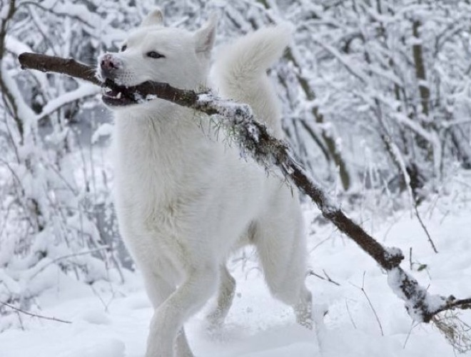 blog_yummets_husky_neige_11_01_14