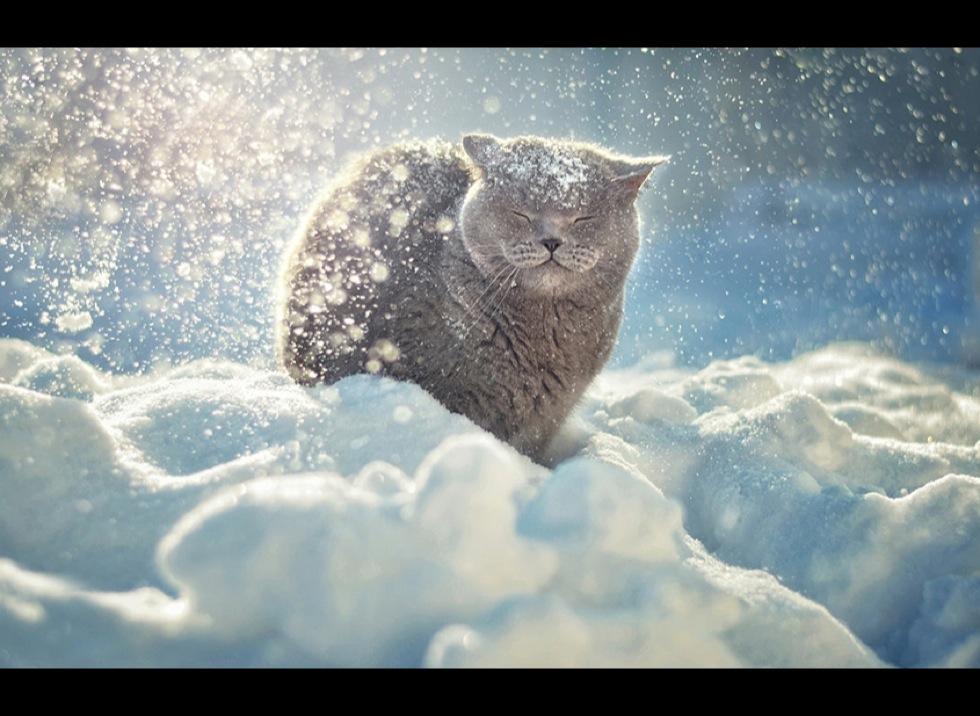 l 'hiver est là ! Blog_yummypets_animaux_neige_11_01_2014
