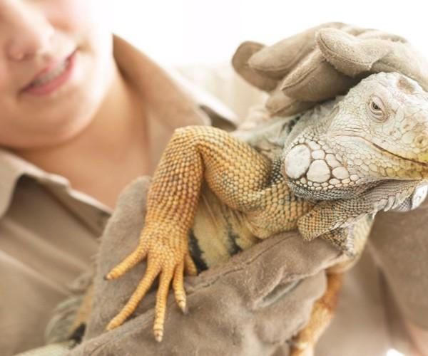 Métier Zoologiste : études, compétences, salaire