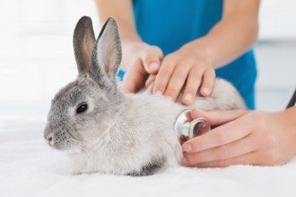 Coccidiosis in rabbits