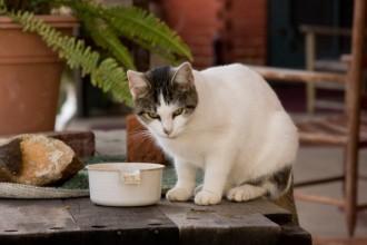 Nourrir son chat âgé : la bonne alimentation