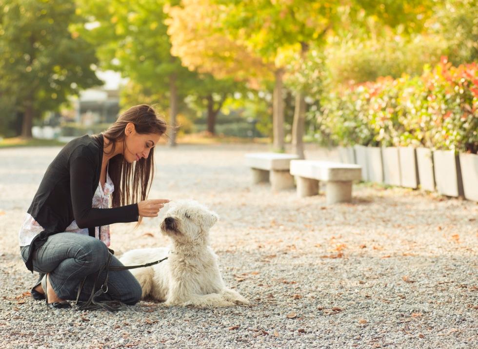 Métier Comportementaliste animalier : études, compétences