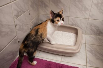 The right place for your cat's litter…