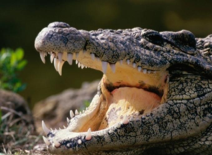 Top 10 des animaux les plus dangereux pour l 39 homme yummypets - Araignee rouge dangereux pour l homme ...