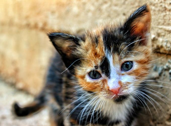 Bevorzugt Que faire quand je trouve un chaton ? - Yummypets KS79