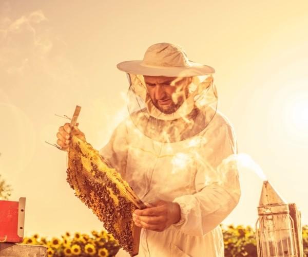 Métier apiculteur : études, compétences, salaire