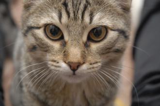 La toux chez le chat