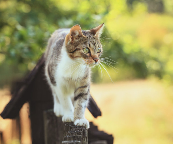 It's flea season: protect your cat